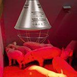 Kerbl Protecteur de Lampe Infrarouge avec Câble de 2,5 m pour Chien de la marque Kerbl image 1 produit